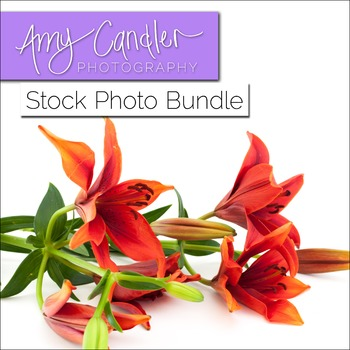 Yellow & Red 'Lily' Flower Stock Photo Bundle