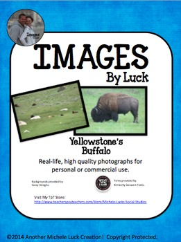 Yellowstone Buffalo Images for Commercial Use