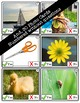 Yes - No Questions (Level 2) Photo Flashcards - Early Language