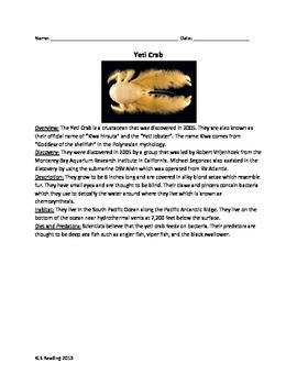 Yeti Crab - Review Article Facts Pictures Information Voca