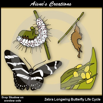 Zebra Longwing Butterfly Life Cycle Clip Art