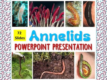 Zoology - Annelids Powerpoint Presentation