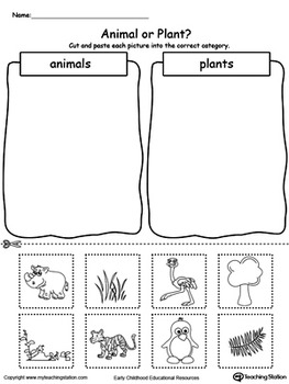 animal-plant sorting