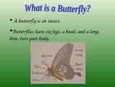 powerpoint butterflies