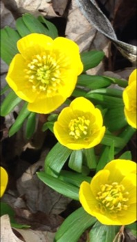 spring /ch/ sentences