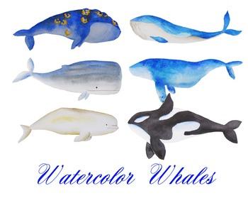 whale clipart, sea clipart, watercolor whales, illustratio