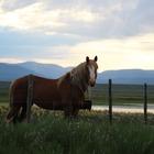 Katrina Crossland