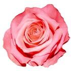 Poppy Rose's Resources