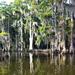 Little Bayou Blessings